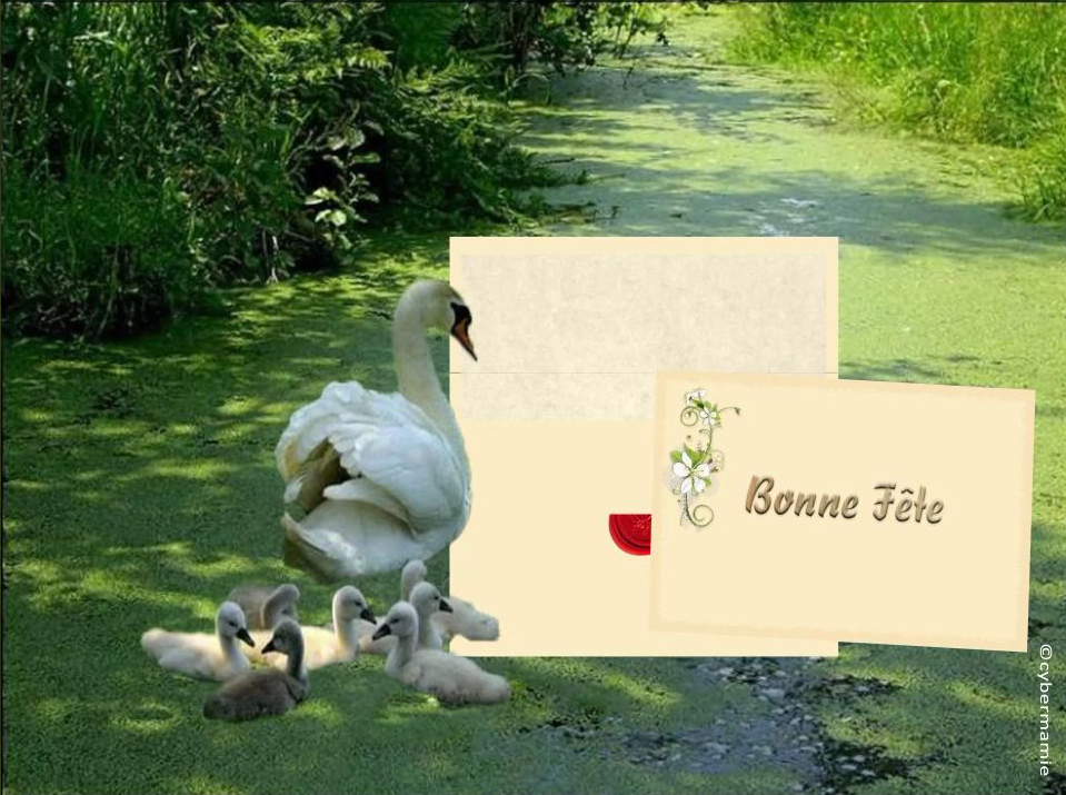 14-Famille-cygnes