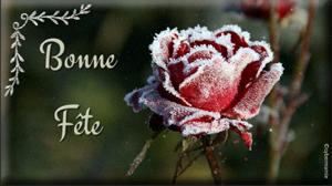 15-Rose givrée