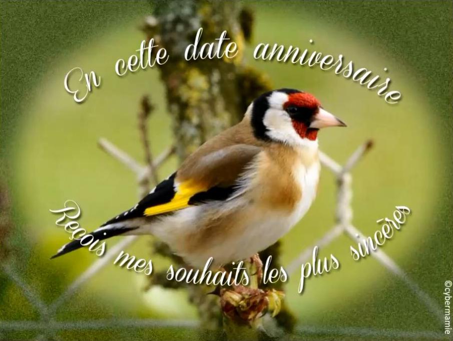14 - Diapo oiseaux