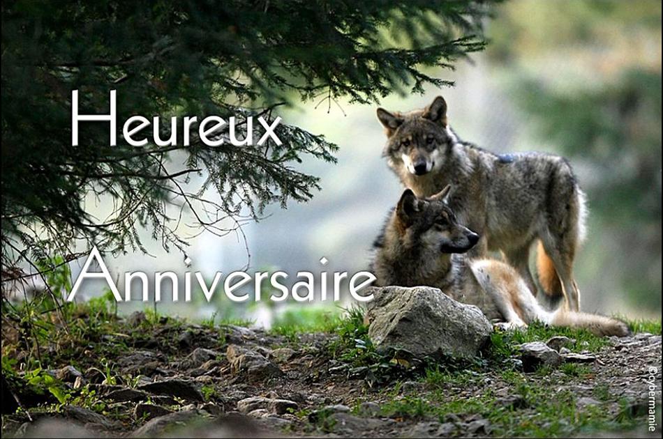11 - Loups