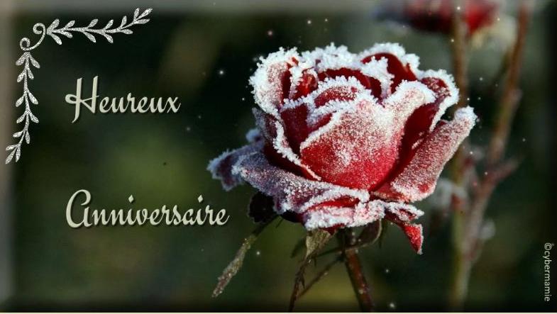 16 - Rose givrée