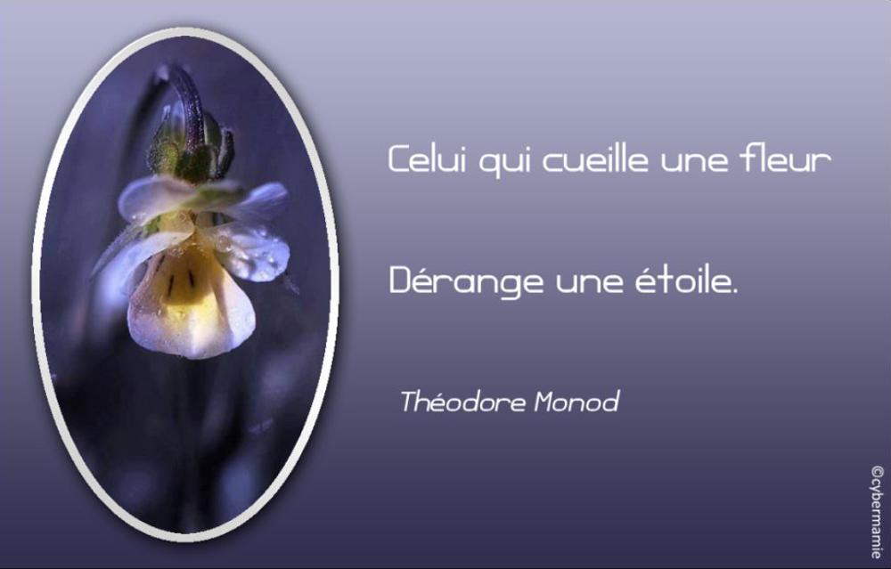 15 - Fleur bleue