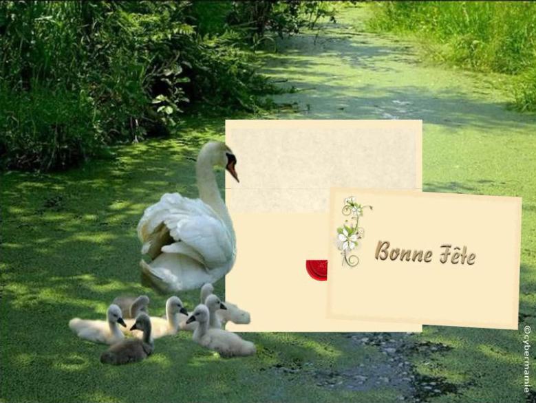 20 - Famille cygnes