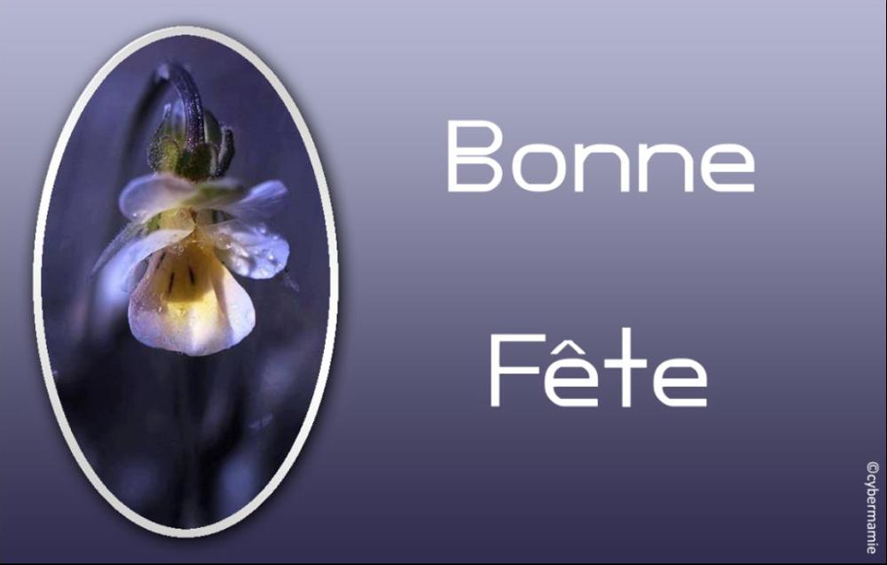 17 - Fleur bleue