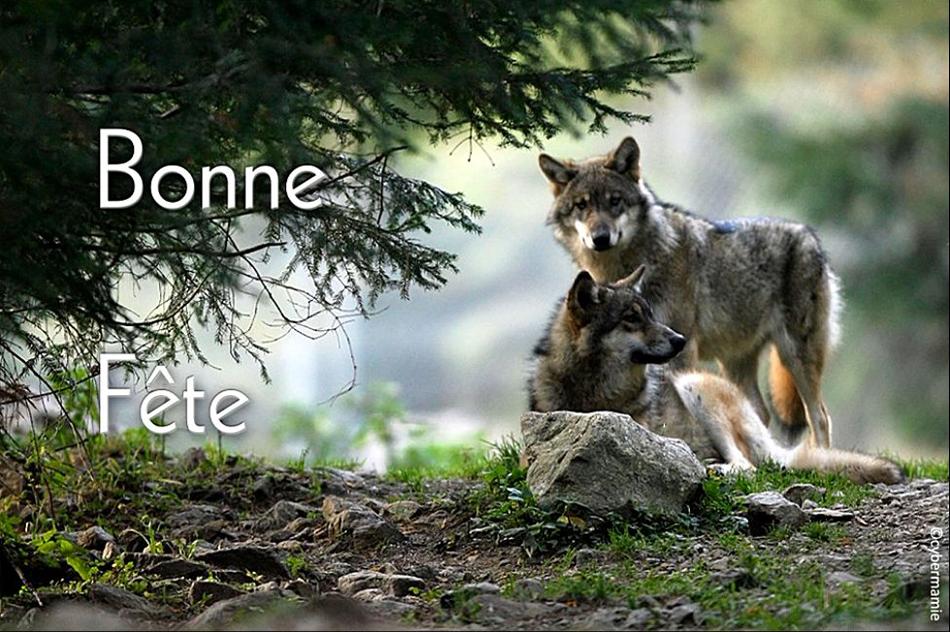 17 - Loups