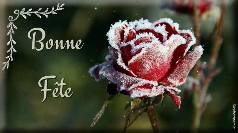 20 - Rose givrée