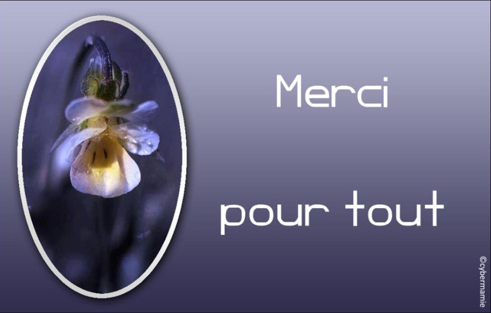 12 - Fleur bleue