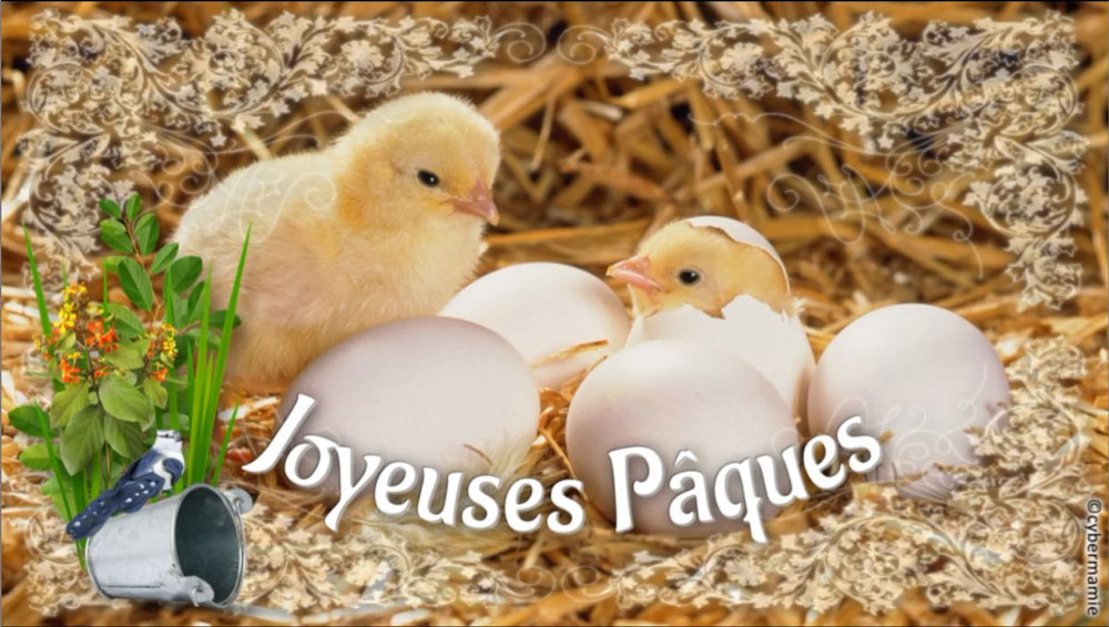 11 - Poussins
